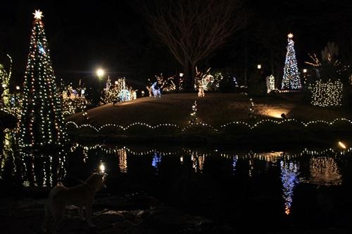 12月ハーブ庭園28