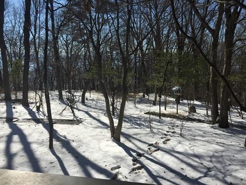 雪の里山8