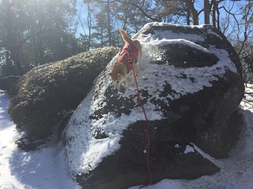 雪の里山12