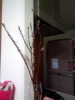 20150308梅の枝