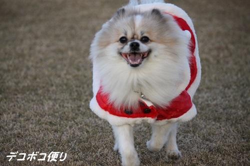 20141224 メリークリスマスライト8
