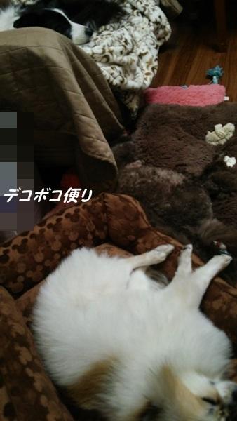 20141228 ご褒美イベント4