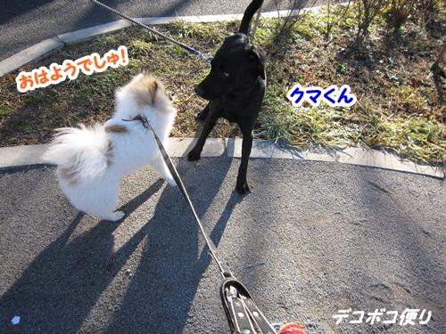 20141229 朝散歩にて4