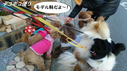 20150120 モデル犬軍団9
