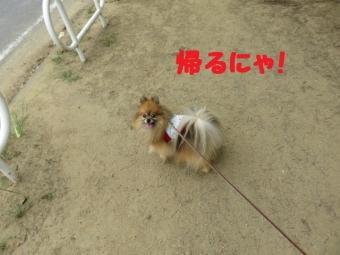 朝9時のお散歩 010