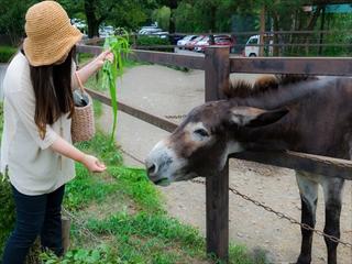 2015-8-11 群馬サファリパーク08 (1 - 1DSC_0029)_R
