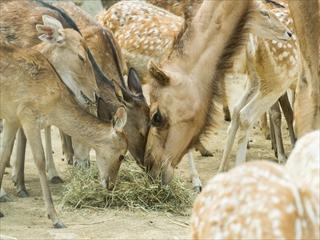 2015-8-11 群馬サファリパーク22 (1 - 1DSC_0059)_R