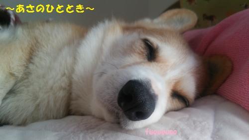 朝寝の節ちゃん