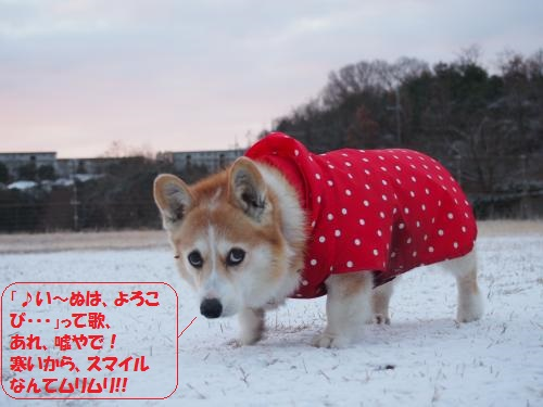 雪は冷たいなー