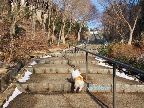 階段がんばるで~