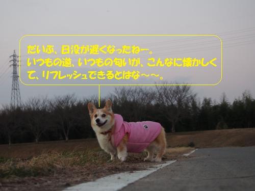 いつものお散歩
