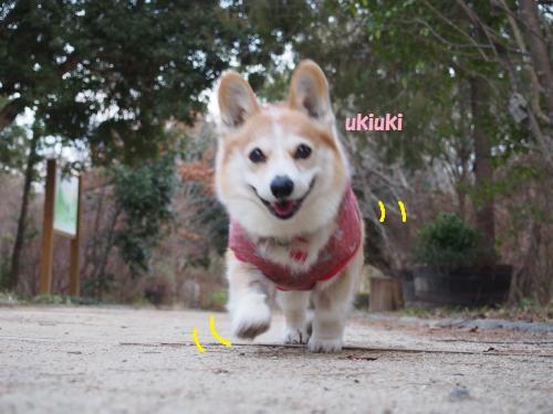 お散歩たのし~~@森林公園