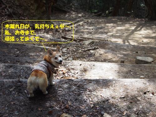山道GO!