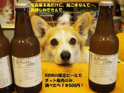 ビールと節さん