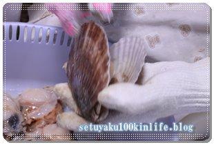 大量の殻つきホタテ!簡単に下処理をしてホタテ刺身にする方法~節約レシピ