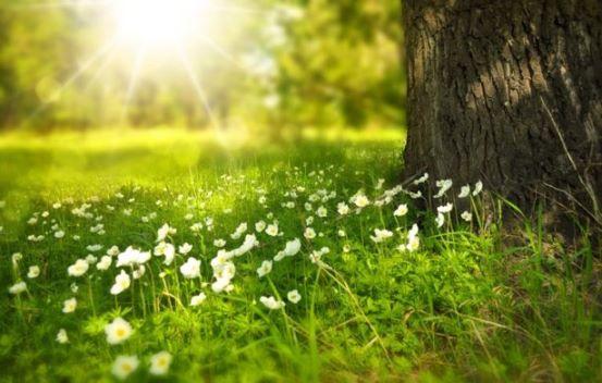 sunlight-flowers