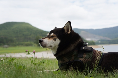 かなやま湖③