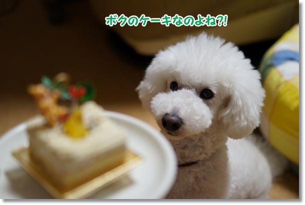 ボクのケーキ2