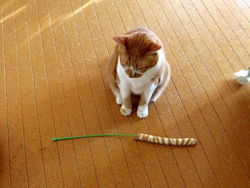 懐かしい猫じゃら!