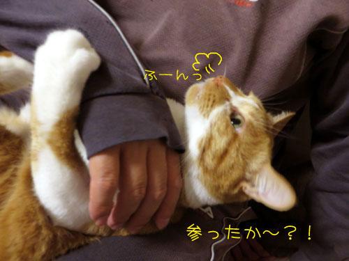 ふーんっ=3