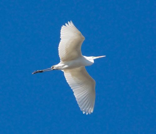 th_bird2_2015010220063295f.jpg