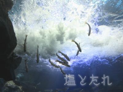 IMG_1412_20150809_04_山の中水族館
