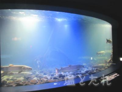 IMG_1452_20150809_04_山の中水族館