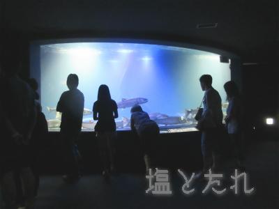 IMG_1457b_20150809_04_山の中水族館