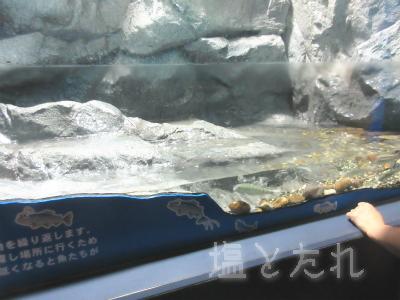 IMG_1462b(ヤマメ)_20150809_04_山の中水族館