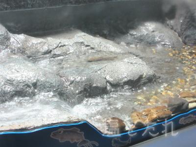 IMG_1462c(ヤマメ)_20150809_04_山の中水族館