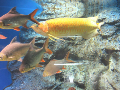 IMG_1484_20150809_04_山の中水族館