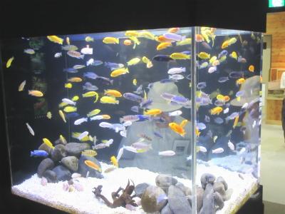 IMG_1485_20150809_04_山の中水族館