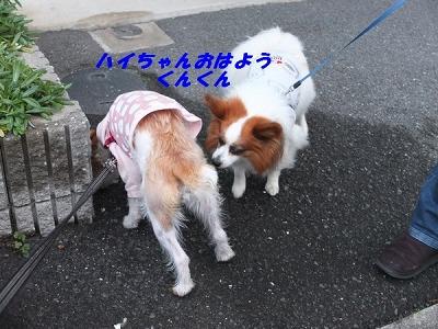 DSCF0523_201501162214177ad.jpg
