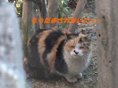 DSCF1146_201503020937505fe.jpg