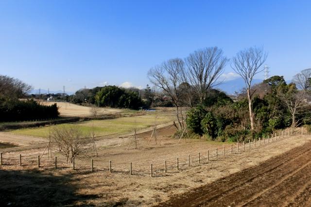 茅ヶ崎里山公園から見た富士山