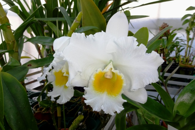 Blc.Crown Princess Masako