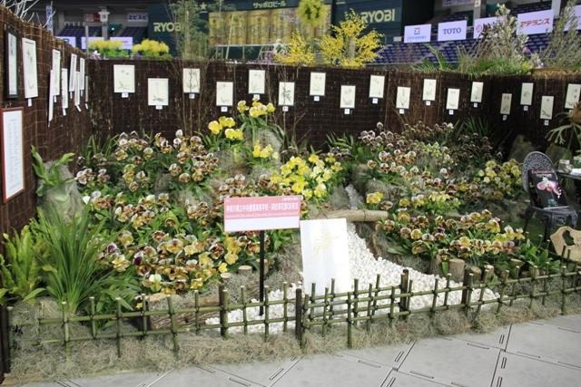 神奈川県立中央農業高等学校・同校草花部OB有志 パフィオペディラムのある庭(奨励賞)