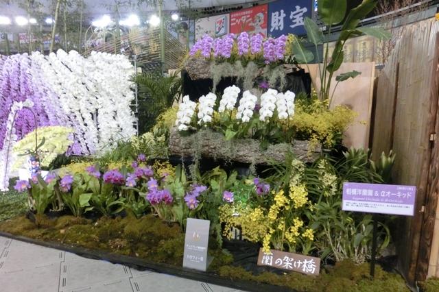 相模洋蘭園 & αオーキッド(トロフィー賞)