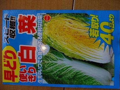 2017-02-13白菜 (1)