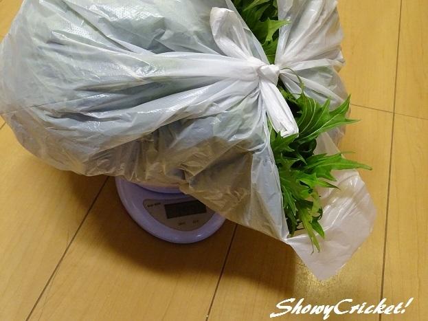 2017-04-14水菜 (9)