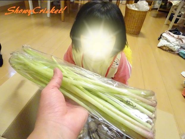 2017-05-17夢農家 (8)