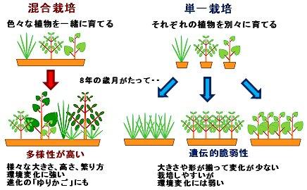 混合栽培と単独栽培