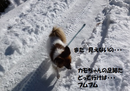 P1310585.jpg