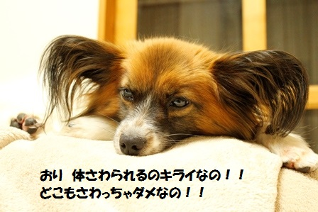 _MG_2803.jpg