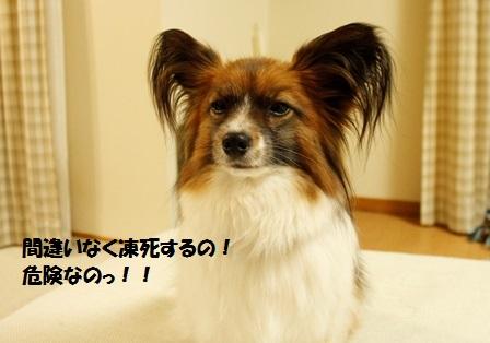 _MG_3663.jpg