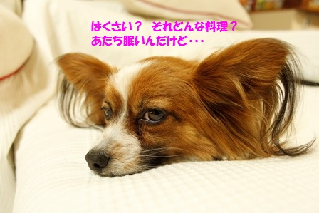 _MG_3730.jpg