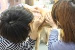耳掃除 (2)