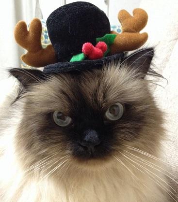 クリスマスそら2
