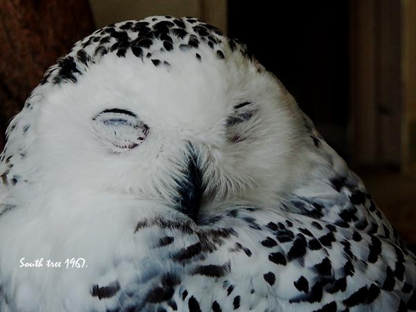 20150813上野動物園ブログ用7