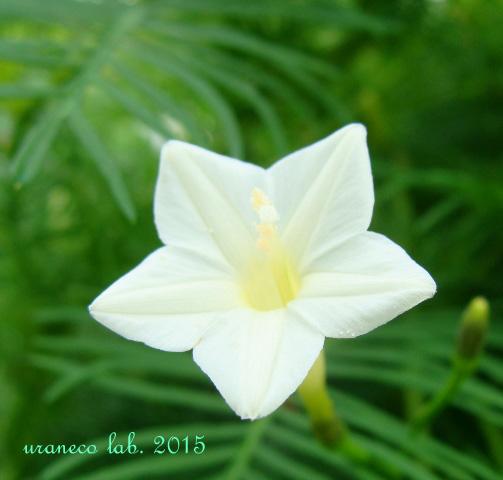 8月10日white star